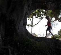 Náš táta, jenž bdí v duši stromu
