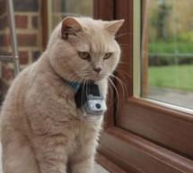 AFO 2014: Co dělá kočka, když se nesnaží být centrem vašeho života?