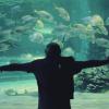 Silver Eye: Člověk ryba
