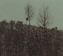 Stopy, střepy, kořeny
