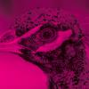Dokument New Game zahájí 4. ročník Opavského páva