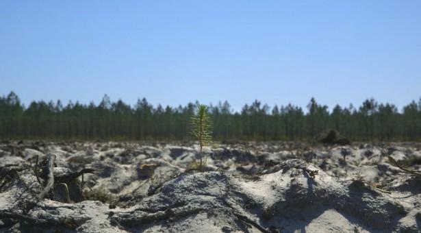 Přijďte na projekci filmu Čas lesů 26. 9.