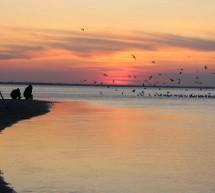 Cenu East Doc Platform má chystaný film o ekologické devastaci lagun